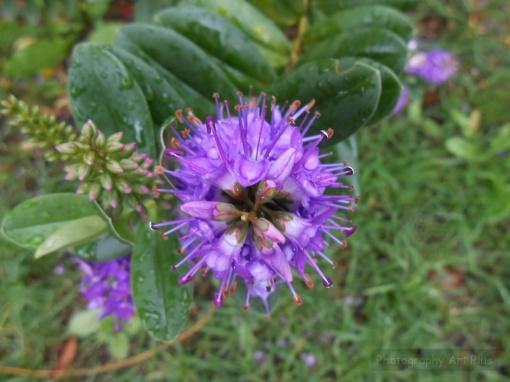 Flor macro